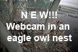Webcam in an eagle owl nest